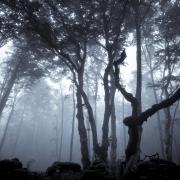 Magie, forêt d'Ambel, Vercors, France