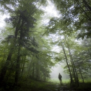 Sous les arbres pensifs, forêt d'Ambel, Vercors