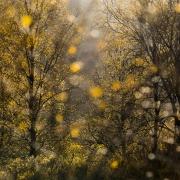 Ecosse_2015 (34 sur 35)