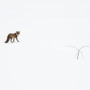 faune (11 sur 57)