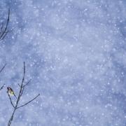 Poésie hivernale