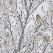 Verdier sous la neige, plateaux du Vercors