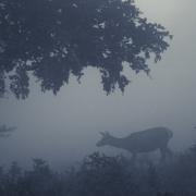 faune (6 sur 57)