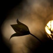 La mélancolie des soleils couchants