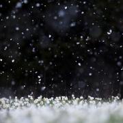 Il neige sur le printemps...