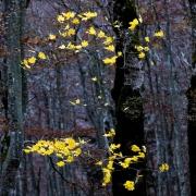 Forêt impressionniste