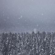 Le murmure de la neige