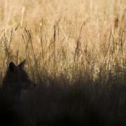 Clair-obscur dans les herbes dorées, Vercors