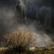 réserve hauts-plateaux automne 1