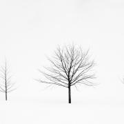 solitudes (13 sur 16)