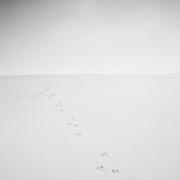 solitudes (9 sur 16)
