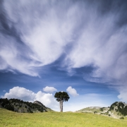 stage-photo-nature-2270