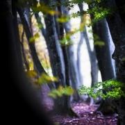 echappee_belle (3 sur 16)