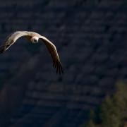 Les ailes du désir, Baronnies, Drôme
