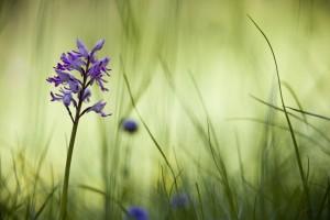 stage_flore_orchidees (1 sur 1)