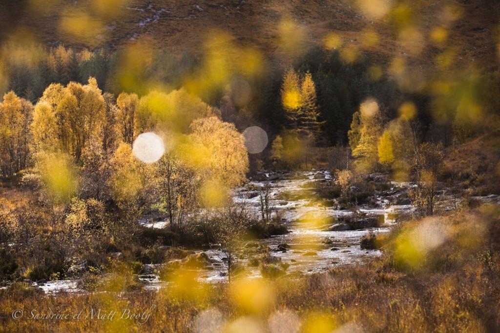 Ecosse automne