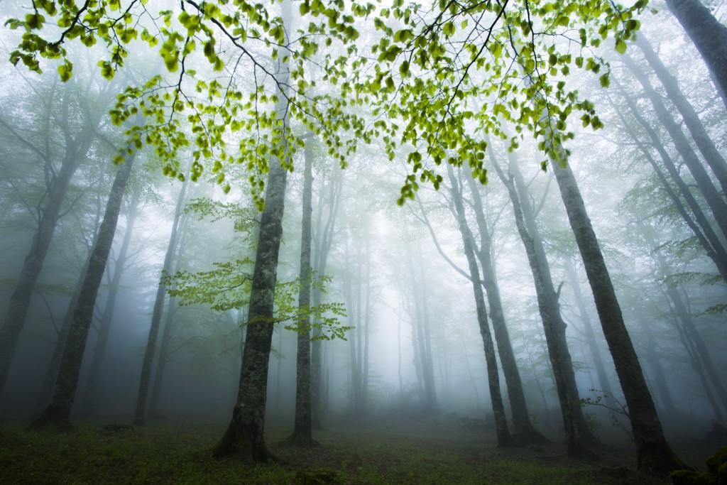 Notre livre sur le Vercors est en train de voir le jour. Il évoquera les moments vécus au coeur de cette nature sauvage qui nous est chère, et les ambiances poétiques et mystérieuses que nous aimons.